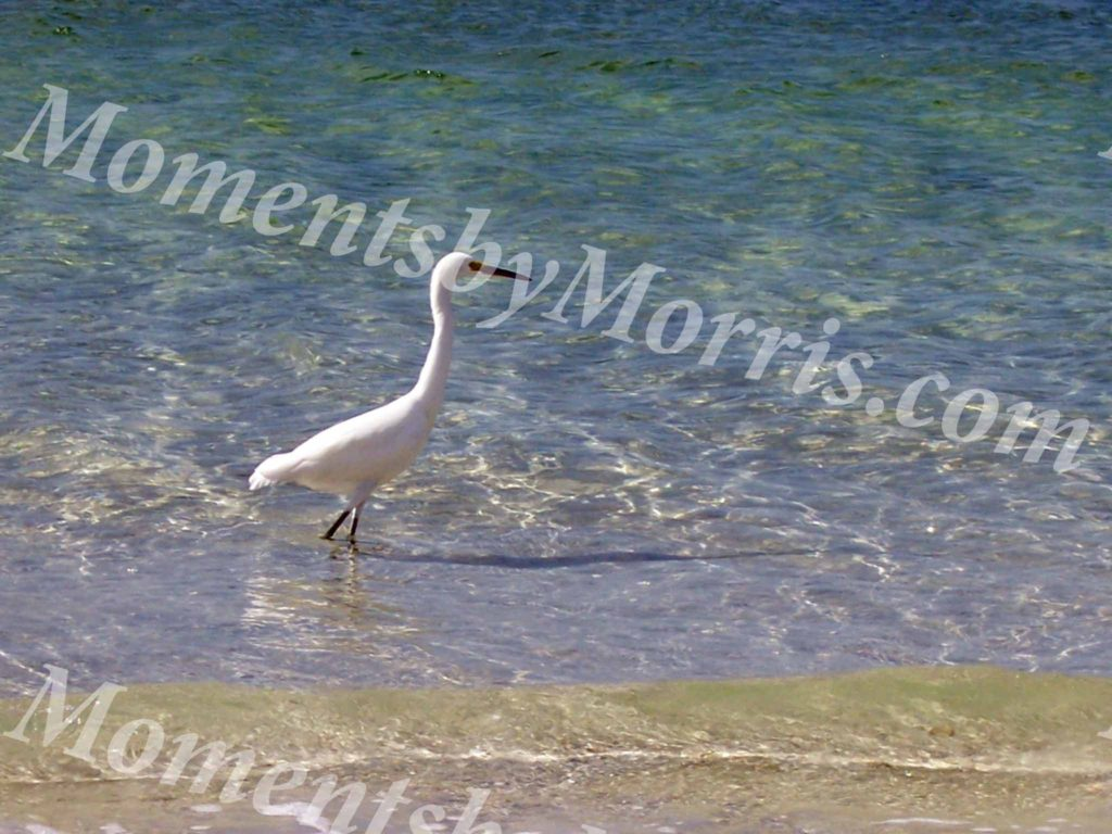 card photo egret 2 w