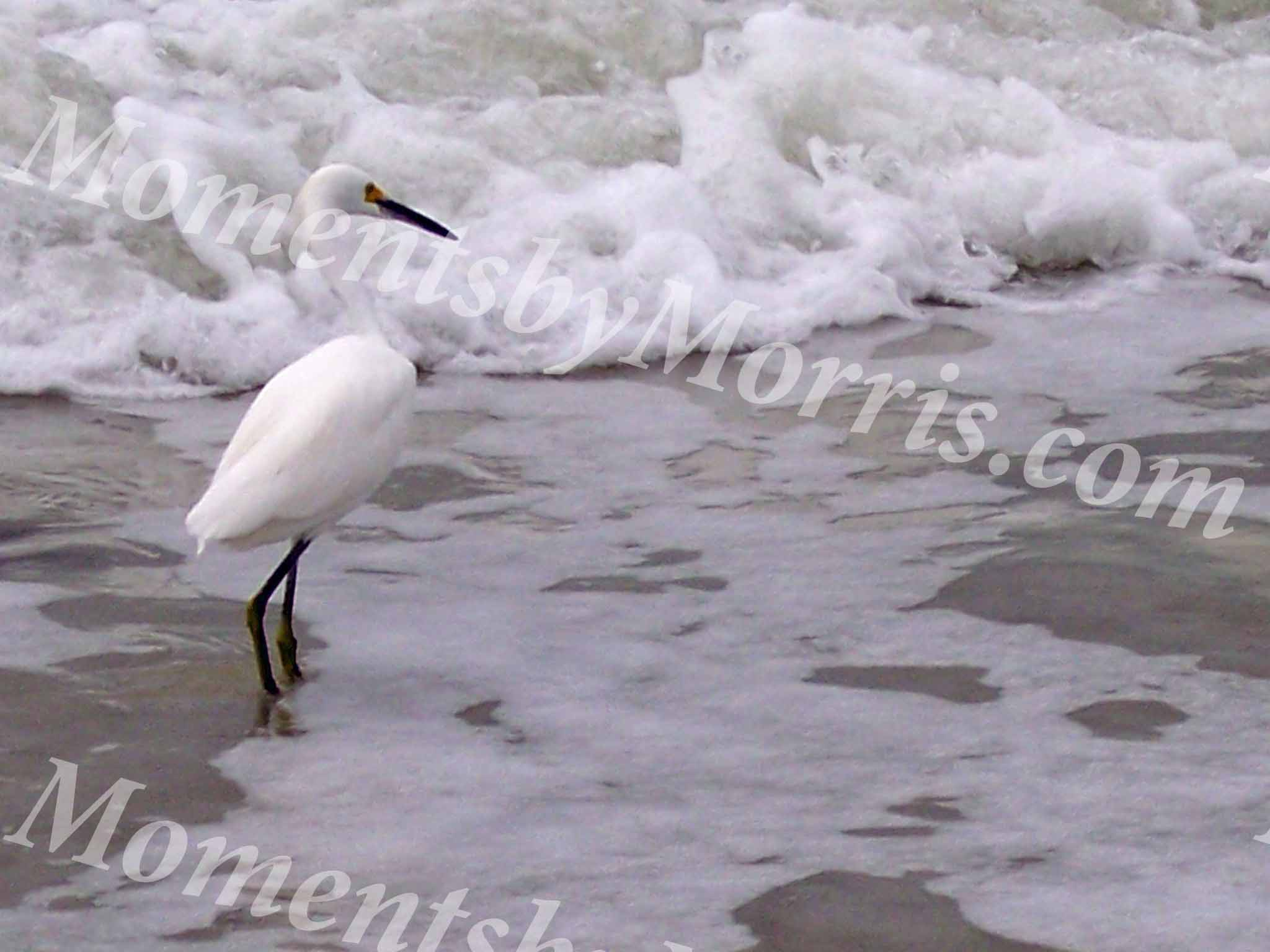 card photo egret w
