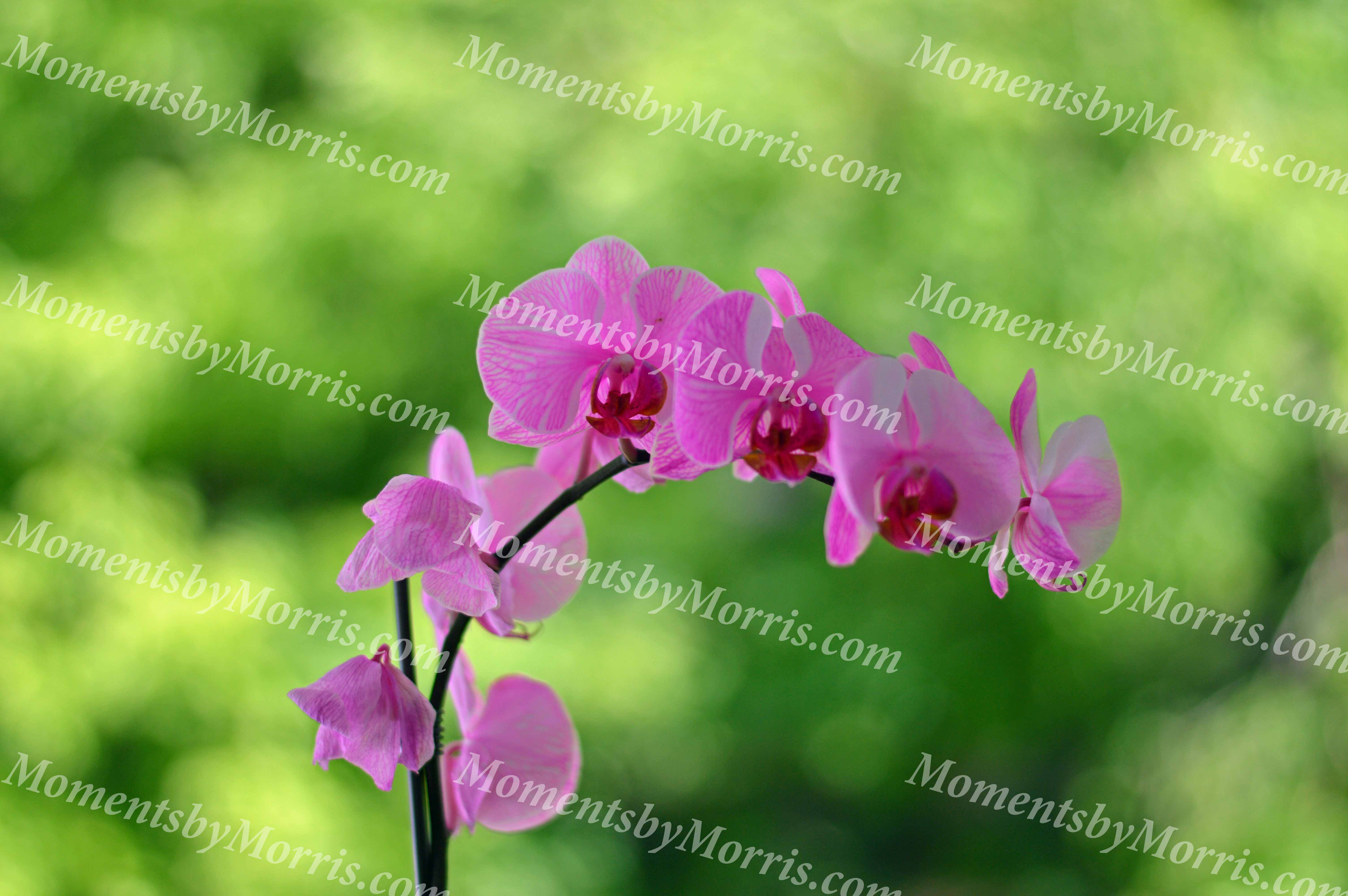 card photo orchid w
