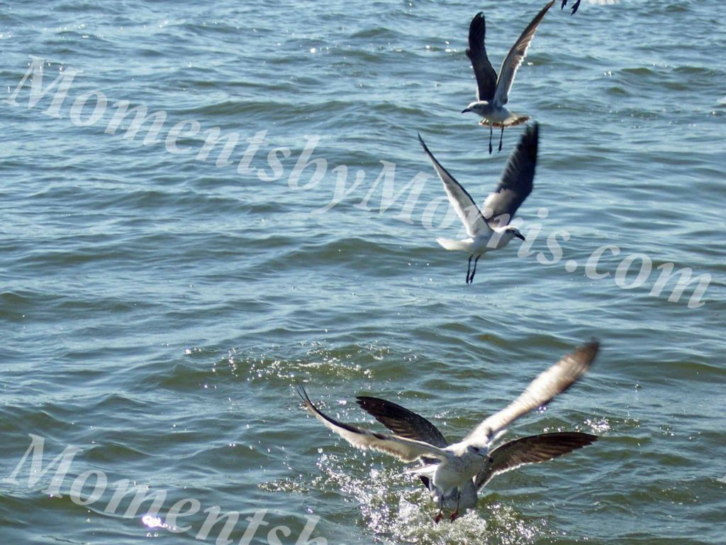 card photo sea gulls w